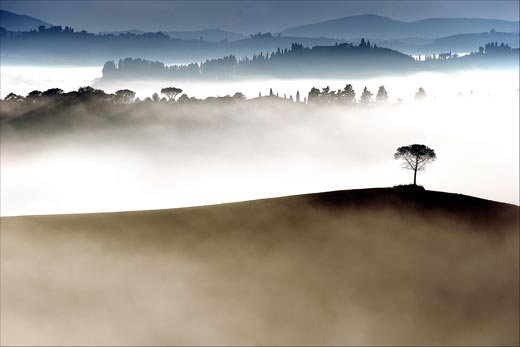 A lone tree emerges from early morning fog, Johan Ensing (Driehuis, The Netherlands), Photographed August 2007, Tuscany, Italy