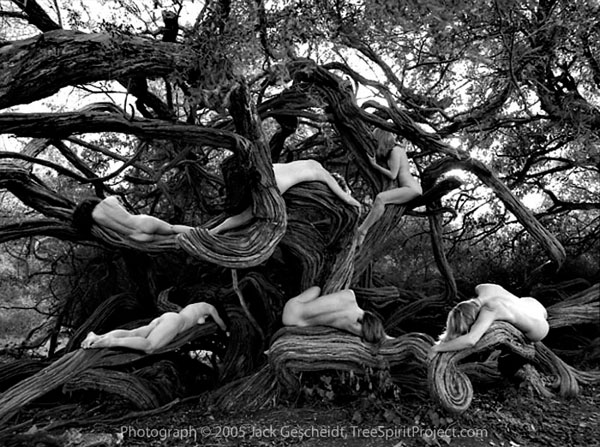 Jack Gescheid TreeSpirit 1