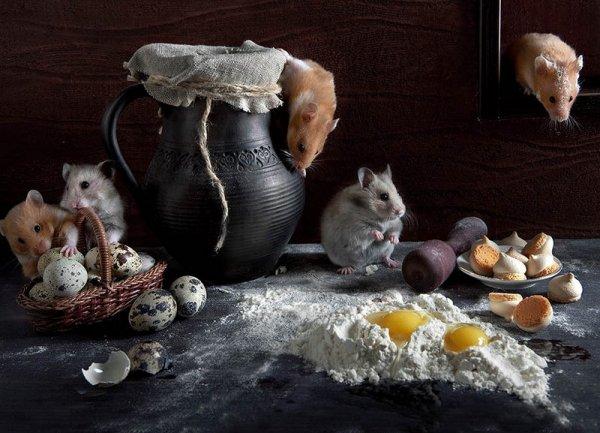 Домашние животные как объект внимания фотографа