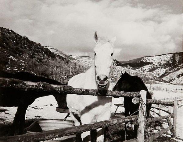 Энди Уорхол – фотограф