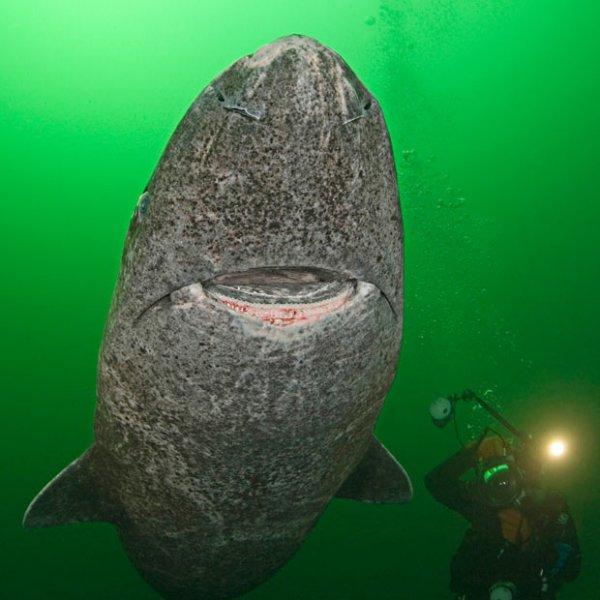 В объективе – океанские глубины